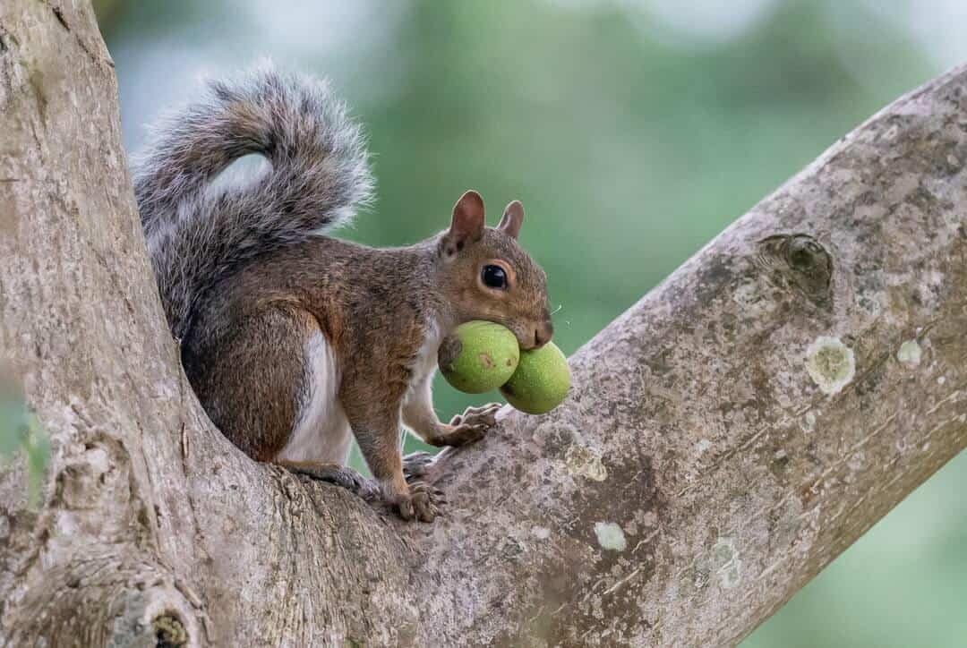 A close up of a squirrel on a branch